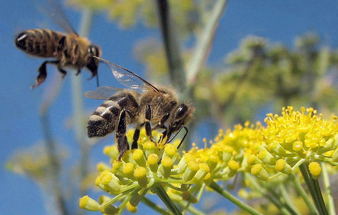 bijenenbloemen
