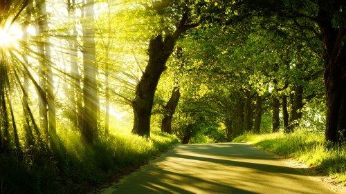 bomen-zonlicht-wegen-zonnestralen
