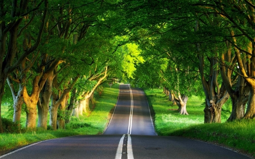 Nature_Other_Green_Road_034704_