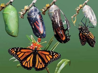 rups en vlinder