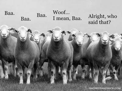 sheepdiscernment